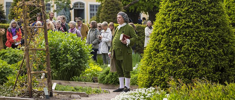 Carl von Linné i Linnéträdgården