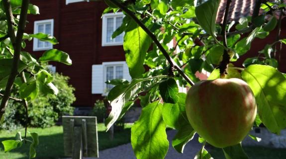 hammarby_apple